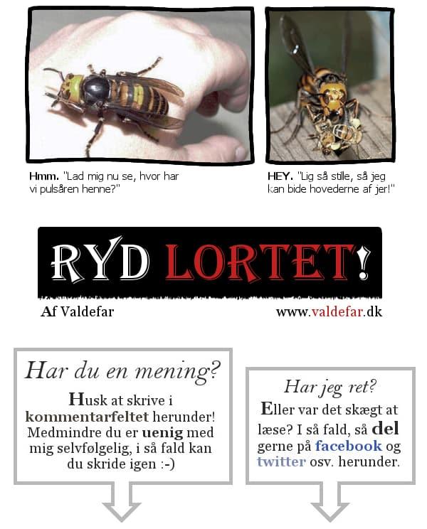 RYD LORTET
