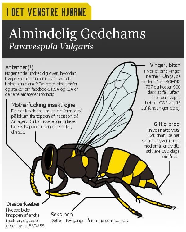 I DET VENSTRE HJØRNE: Almindelig gedehams, Paravespula Vulgaris. Antenner, motherfucking insektøjne, dræberkæber, seks ben, giftig brod og vinger, bitch.